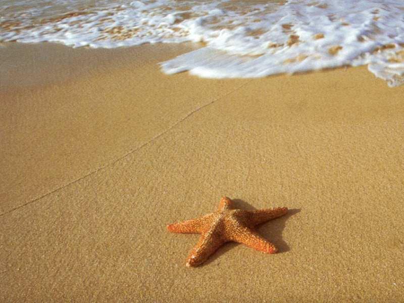 Deniz yıldızı mikro destek