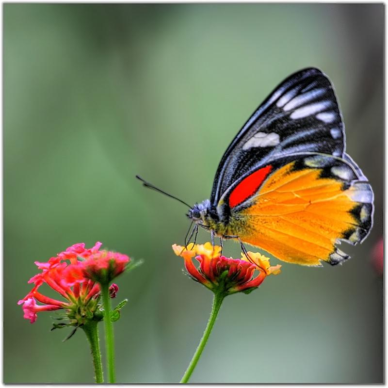 kelebek-resim.jpg (800×800)